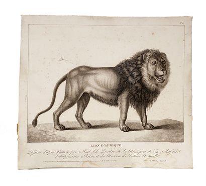Lot d'estampes comprenant : - L'éléphant femelle et le lion d'afrique d'après Huet...