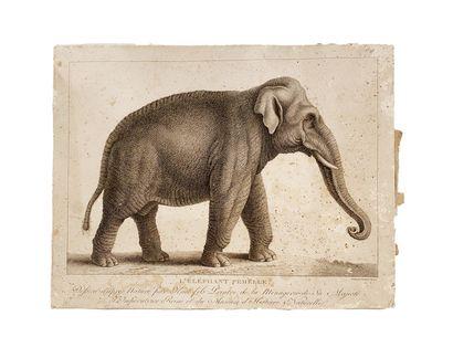 Lot d'estampes comprenant : - L'éléphant...