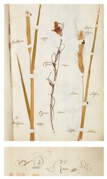 [HERBIER]. ROUX (Benoît). Codex herbarum....
