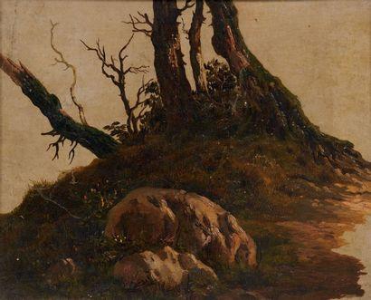 ATTRIBUÉ À JOHANN CHRISTIAN REINHART (1761-1847) Etude de rocher et d'arbres Carton....