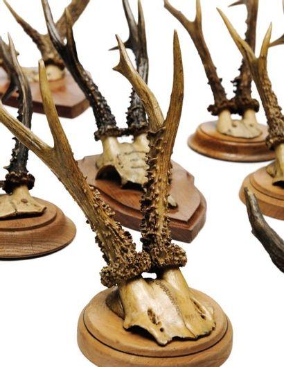 Lot de 18 massacres de cerfs et de chevreuils,...