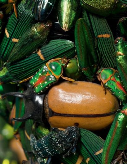 Jan FABRE (Né en 1958) Beekeeper II, 1998-1999 Sculpture composée de scarabées et...