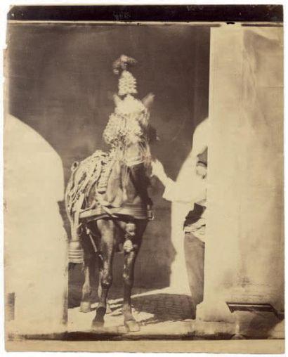 EDMOND LEBEL Rome, cheval caparaçonné, vers 1865 Épreuve sur papier albuminé d'après...
