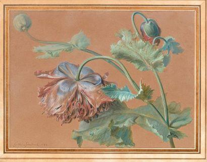 Gérard van SPAENDONCK (1746-1822) Branches de pavots Aquarelle et gouache sur papier...