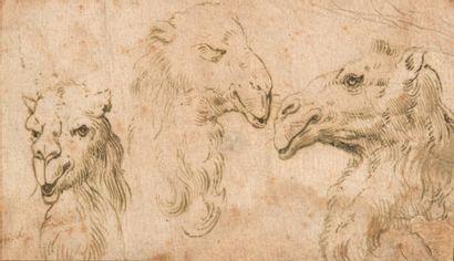 École FRANCAISE du XVIIIe siècle, suiveur de Charles LEBRUN Trois têtes de chameaux...