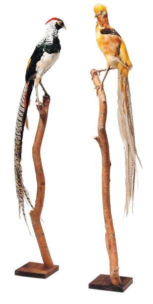 Deux oiseaux naturalisés sur leurs branches....