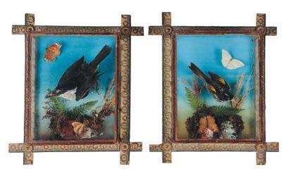 Oiseaux naturalisés dans des cadres. H_38,5...