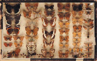 Trois anciennes boîtes à papillons.