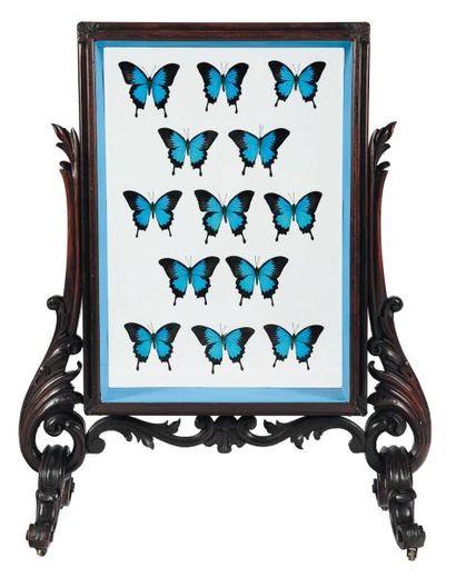 Pare feu en bois présentant treize papillons aux ailes bleues. H_99 cm L_75 cm