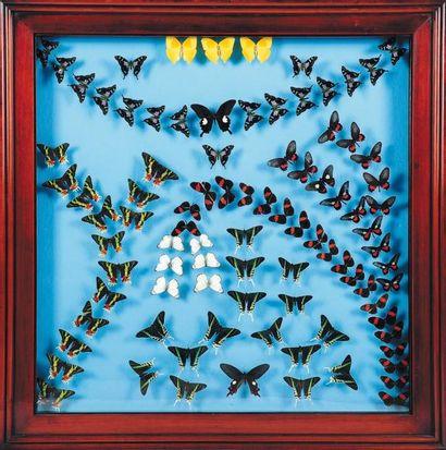Grand cadre en bois présentant une composition de papillons sur fond bleu. H_100...