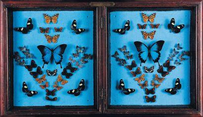 Double cadre comprenant des papillons. H_48 cm L_82,5 cm