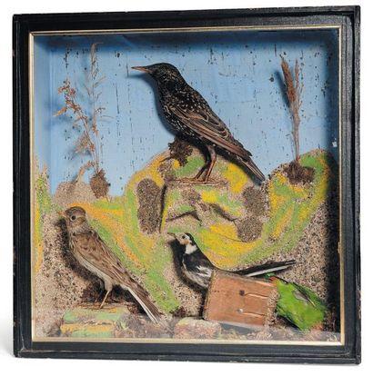 Oiseaux naturalisés dans une ancienne boîte...