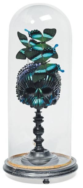 Composition formée d'un crâne recouvert d'élytres et de papillons sous un globe....