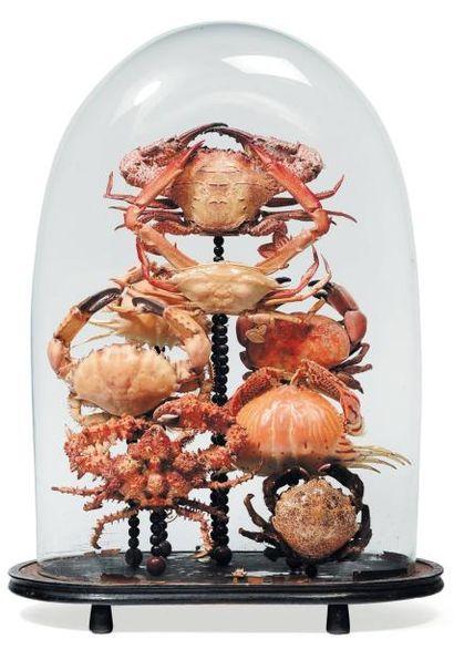 Composition de huit crabes de différentes...
