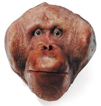 Tête de Babouin en cire. H_26,5 cm