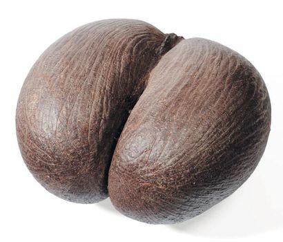 Coco fesse H_27 cm