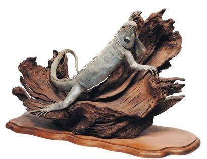 Iguane naturalisé