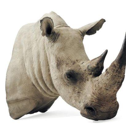 Tête de rhinocéros en résine. H_120 cm L_150...