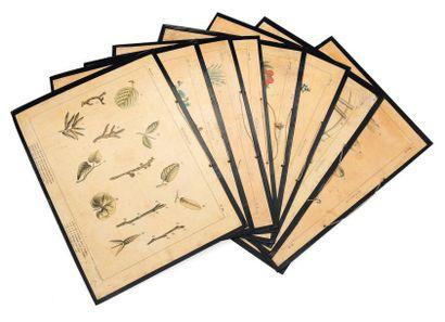 Suite de huit anciennes planches représentant...