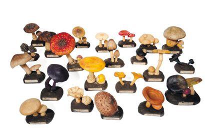 Lot d'une vingtaine de variétés de champignons...