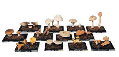 Lot de douze variétés de champignons sur...