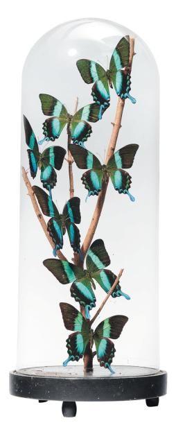Composition de papillons de différentes couleurs...