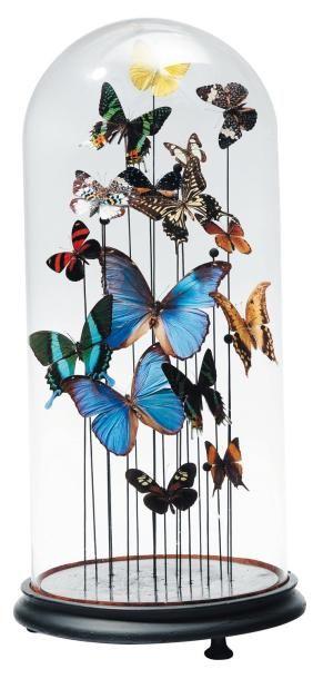 Composition de papillons de différentes tailles...