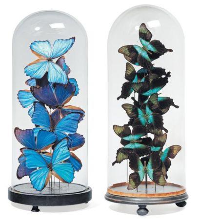 Deux compositions de papillons verts et bleus...