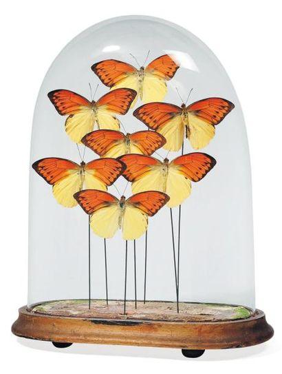 Composition de papillons jaunes dans un globe....