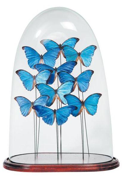 Composition de papillons bleus dans un g...
