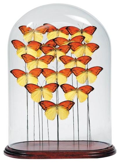 Composition de papillons jaunes dans un globe...