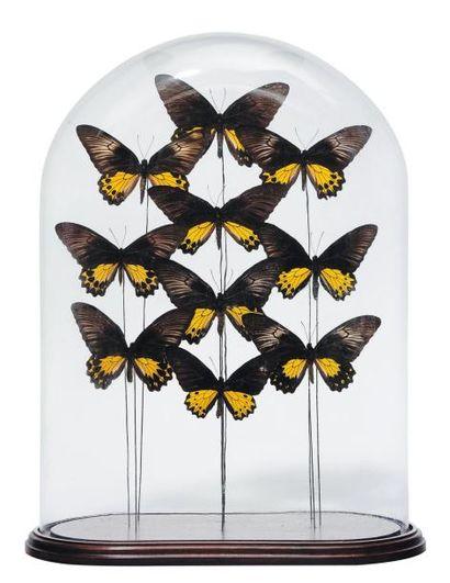Composition de dix papillons aux ailes jaunes...