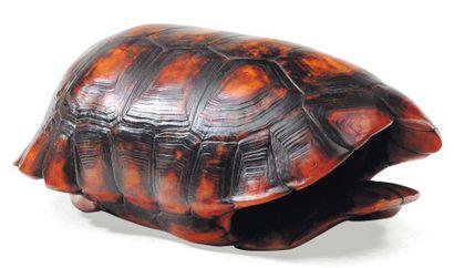 Carapace de tortue de mer. L_35 cm