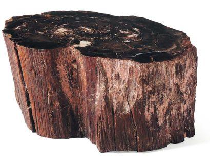 Tronc d'arbre fossilisé. H_21 cm