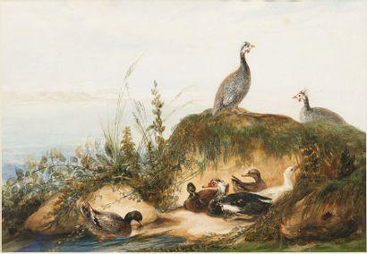 ALINE ALAUX (1813 - 1856)