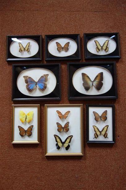 Carton de pièces encadrées dont papillons...