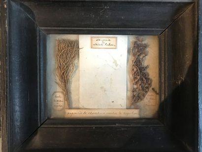 Souvenir de Sainte-Hélène Cadre en bois mouluré peint en noir. Il contient sous...