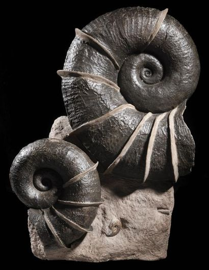 Groupe d'ammonites ailées Lytoceras cornicopiae...
