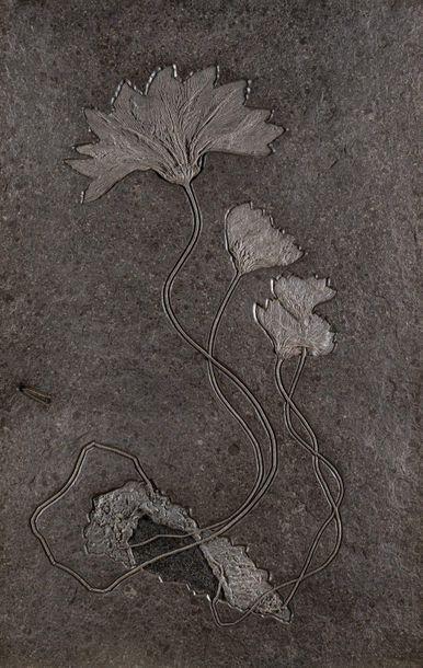 Importante plaque de crinoïdes Seirocrinus...
