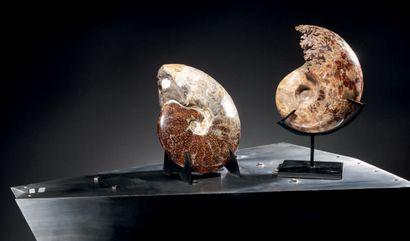 Amonite Madagascar Sur un socle H. 24 cm
