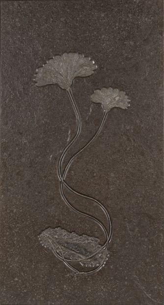 PLAQUE FOSSILE DE CRINOÏDES Seirocrinus subangularis...