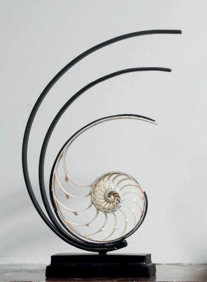 COEUR DE NAUTILE SUR SOCLE NOIR H. 27 cm...