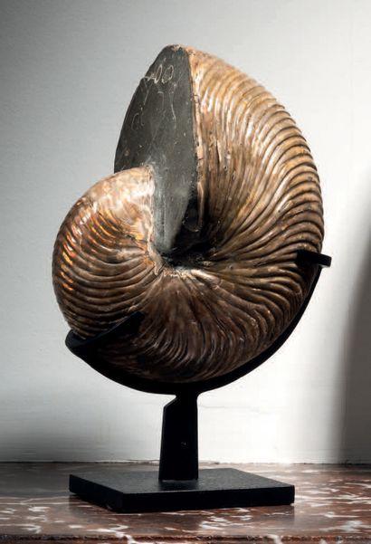 FOSSILE DE NAUTILE Cymatoceras sp. Albien,...
