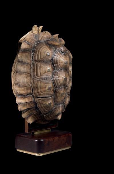 Tortue, Centrochelys Sulcata Afrique sub-saharienne...