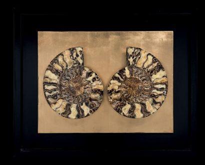 Ammonite Cleoniceras besairiei encadrée Région...