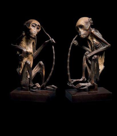 Deux momies de singe Philippines H. 27 cm...
