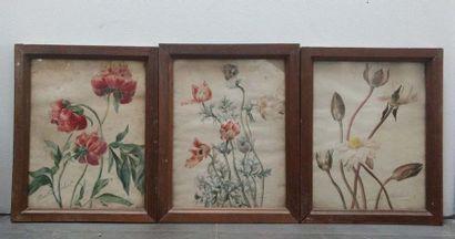 MARTHE ROBERT Ensemble de quatre aquarelles...