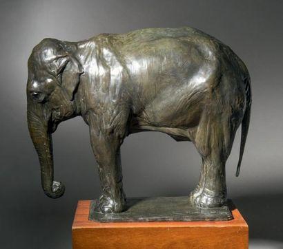 Rembrandt BUGATTI (1884 - 1916) Eléphant au repos - Circa 1909 - 1910 Sculpture en...