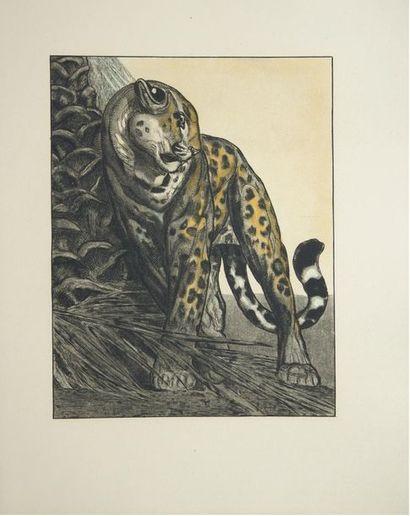 Honoré de BALZAC (1799 - 1850) Une passion dans le désert. Illustrations de Paul...