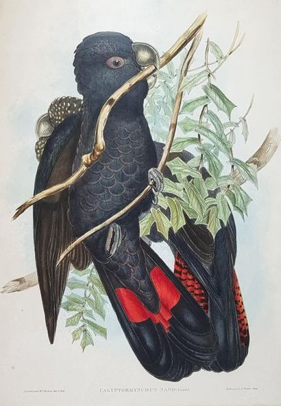 D'après John GOULD (1804-1881) Oiseaux. Quatre lithographies. A vue : 36 x 53 c...